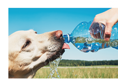 Dog drinking water from water bottle