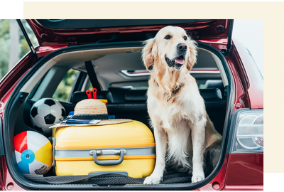 Dog in back of car ready to travel