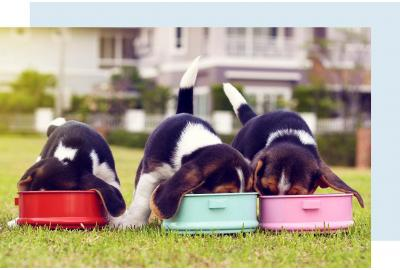 Puppies Feeding Together