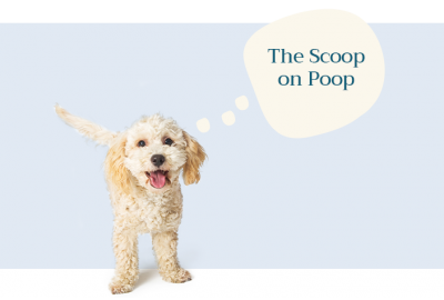 "Cream Dog with Thought Bubble Saying ""The Scoop on Poop"""