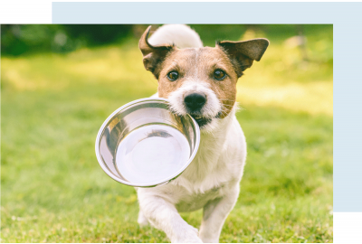 Dog running with water bowl in mouth