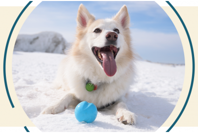 Dog playing with ball in the winter