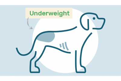 underweight dog drawing