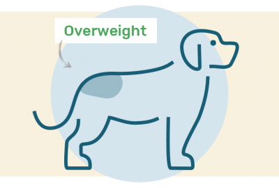 overweight dog drawing