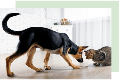 Dog and cat eating from the same food bowl