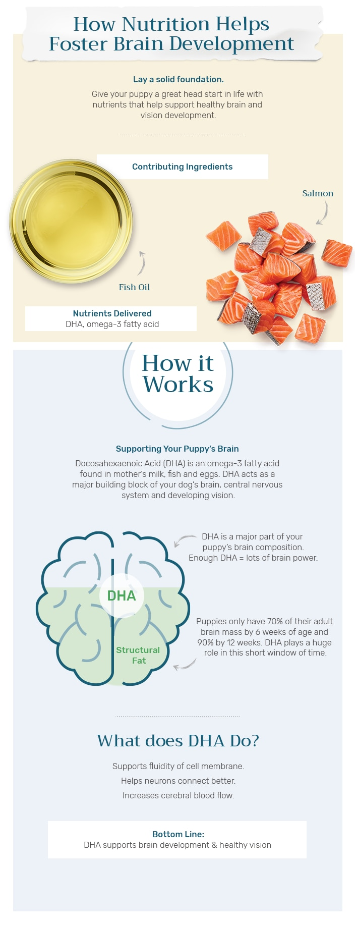 How DHA supports brain development infographic